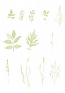 水彩效果植物