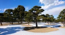天空 树木