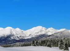 雪山 树林
