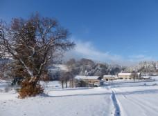 树木 雪景