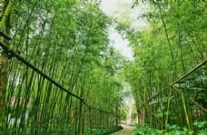 幽静的竹林步道