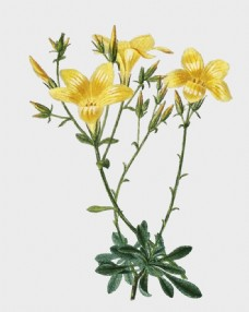花卉植物主题