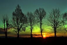 晚霞 树林