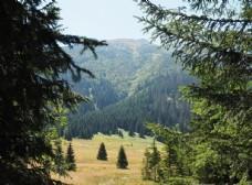 山脉 树林