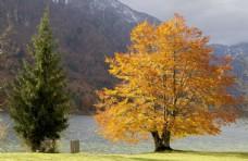 山脉 树木 河流