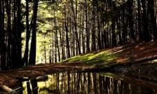 树木森林树林