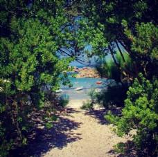沙滩 树木