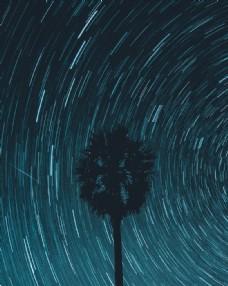 树木 旋涡