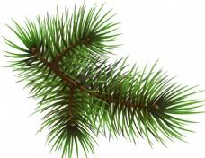 圣诞节树枝