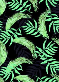 热带植物  叶子  原创