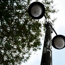 白天大树下天空背景的路灯