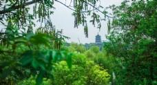 杭州雷峰塔