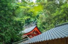 树林里的日本神社