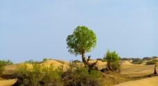 新疆塔克拉玛干大沙漠