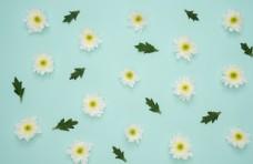 清新小花朵素材背景