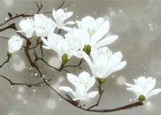 梨花雪白枝頭傳統插畫背景