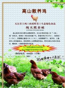 散养鸡 土鸡蛋  中国风 水墨