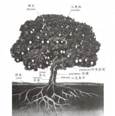 瑜伽之树 图片 文字 瑜伽