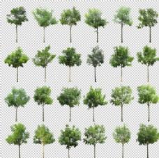 园林景观绿化苗素材