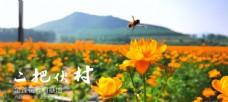 金莲花美景图六月遍地金黄 花卉