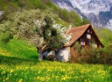 春天绿色美景