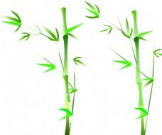 2個  青竹 綠葉