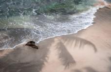蓝色的 大海 白色的 沙滩 海