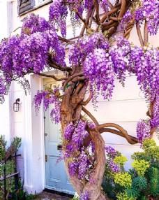 院子风景树花