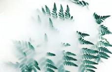 白色绿情绪摄影 环境  壁纸