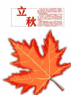 豎版立秋楓葉手繪分層