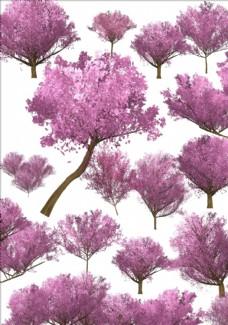 櫻花樹 植物 櫻花 景觀素材