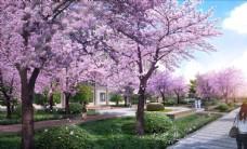 樱花园景观
