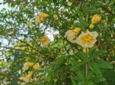 春夏 白色花朵 野餐ins