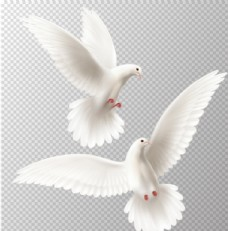 白色矢量鸽子