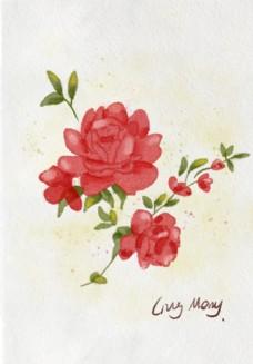 水彩玫瑰插畫