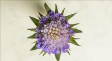 4k視頻 花朵綻放