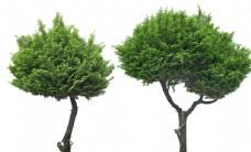 免扣植物素材