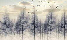 树林树木抽象画