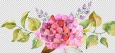 水彩手繪花卉花朵植物