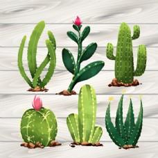 仙人掌植物印花