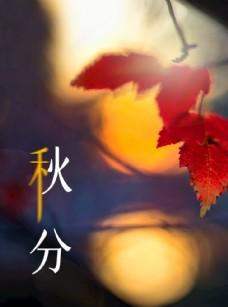 秋分海報秋季入秋素材秋天背景
