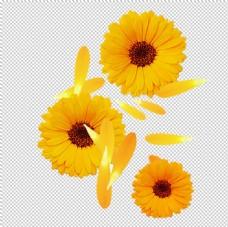 手绘植物花卉