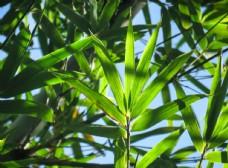 树叶夏季清新绿色背景素材