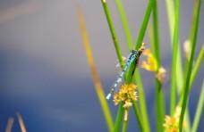 蜻蜓小草自然生物背景素材