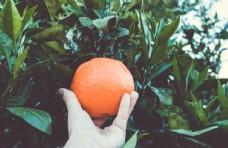 橘子橙子水果新鲜背景素材