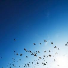 天空蓝色鸟群自然生态背景素材