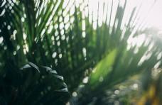 绿植清新自然生态背景素材