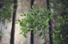 植物绿植清新简约背景素材