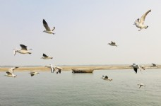 海鷗海邊海洋旅游風景背景圖片