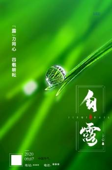 白露 绿色 露珠图片